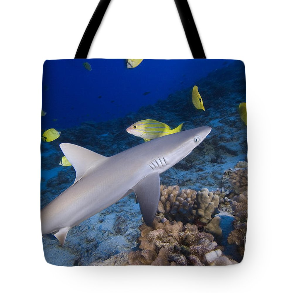Amblyrhnchos Tote Bag featuring the photograph Grey Reef Shark by Dave Fleetham - Printscapes