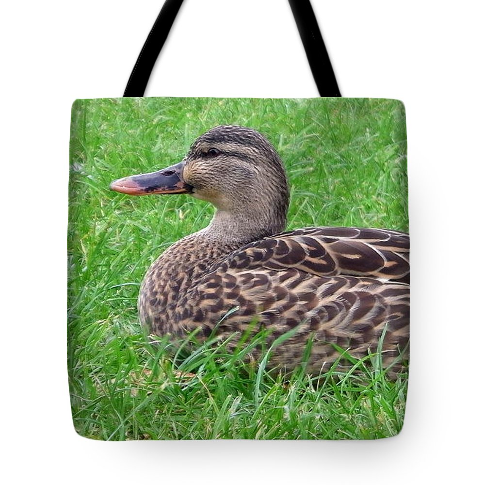 New Zealand Tote Bag featuring the photograph New Zealand - Female Mallard Duck by Jeffrey Shaw