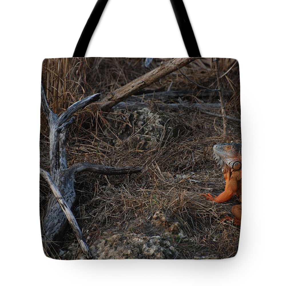 Branches Tote Bag featuring the photograph Orange Iguana by Rob Hans