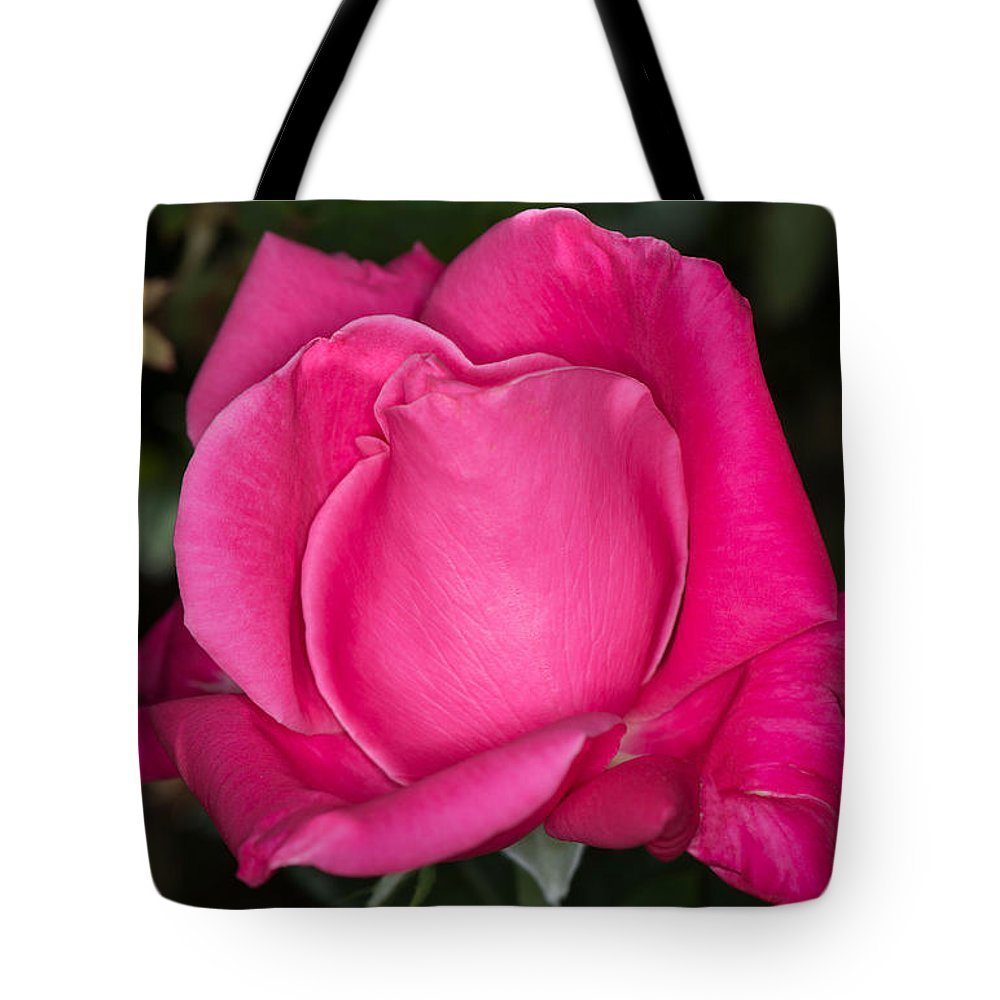 Rose Tote Bag featuring the photograph Pink Rose by Michael Moriarty
