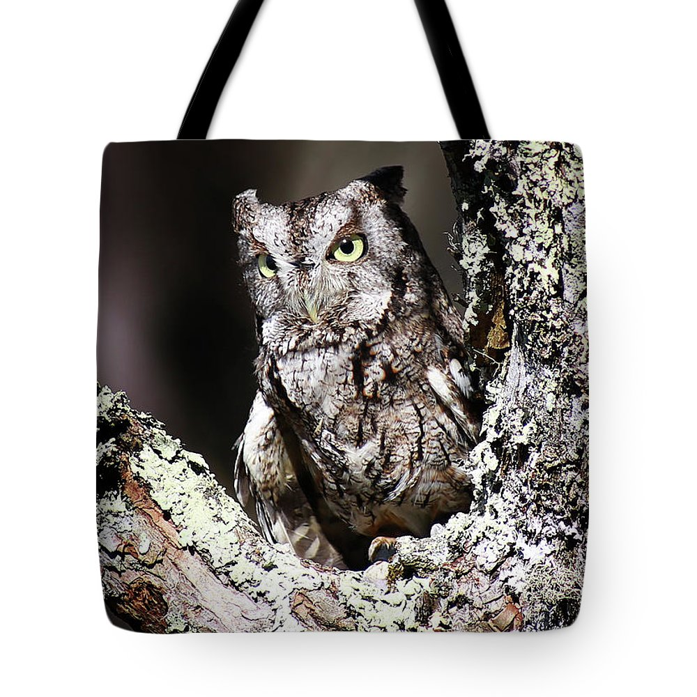 Screech Owl Tote Bag featuring the photograph Screech Owl by SC Shank