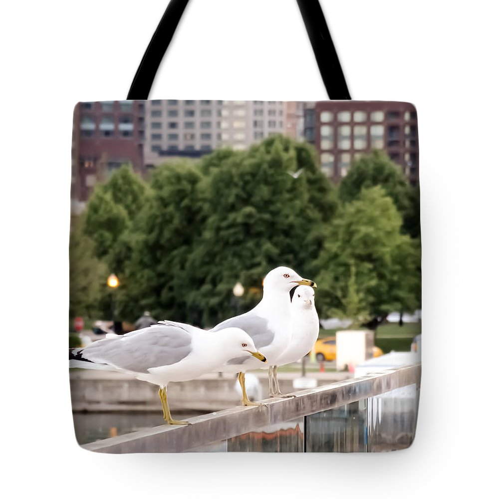 3 Seagulls In A Row Tote Bag featuring the photograph 3 Seagulls In A Row by Cynthia Woods