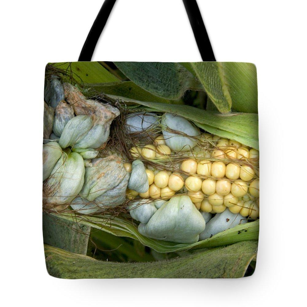 The Prada bag (SMUT)