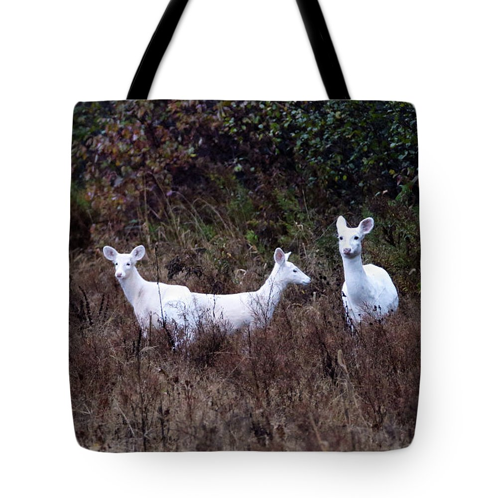 White Tote Bag featuring the photograph 3 White Deer by Brook Burling