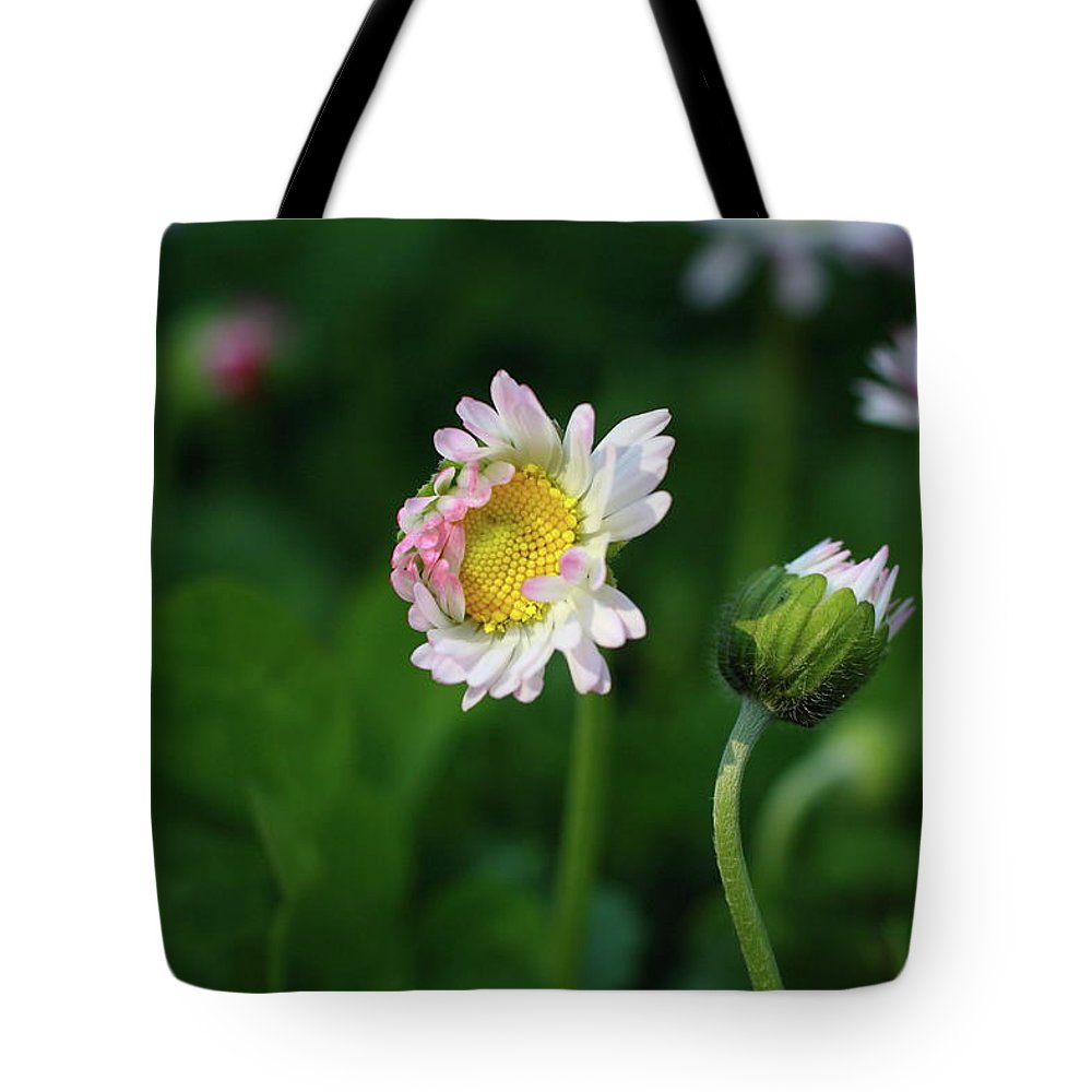 Macro Tote Bag featuring the photograph Chamomile Flowers by Dragan Nikolic
