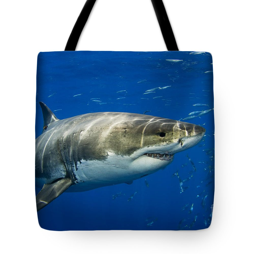 Beautiful Tote Bag featuring the photograph Great White Shark by Dave Fleetham - Printscapes