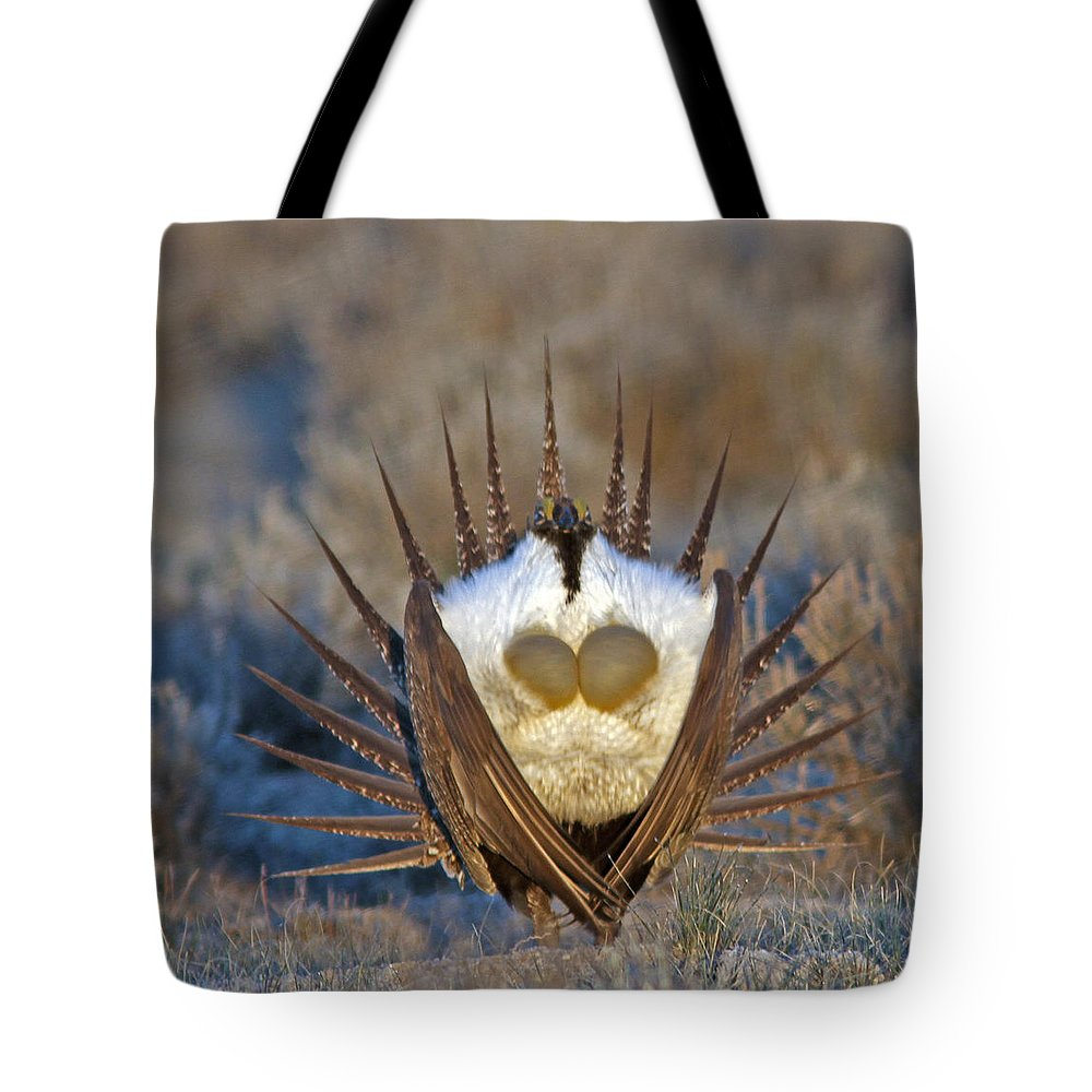 Greater Sage-grouse Tote Bag featuring the photograph Greater Sage-grouse by Gary Wing