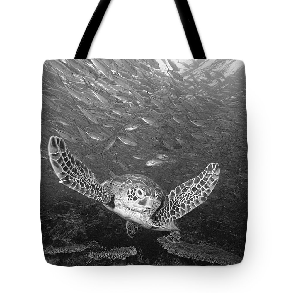 Animal Art Tote Bag featuring the photograph Green Sea Turtle by Dave Fleetham - Printscapes