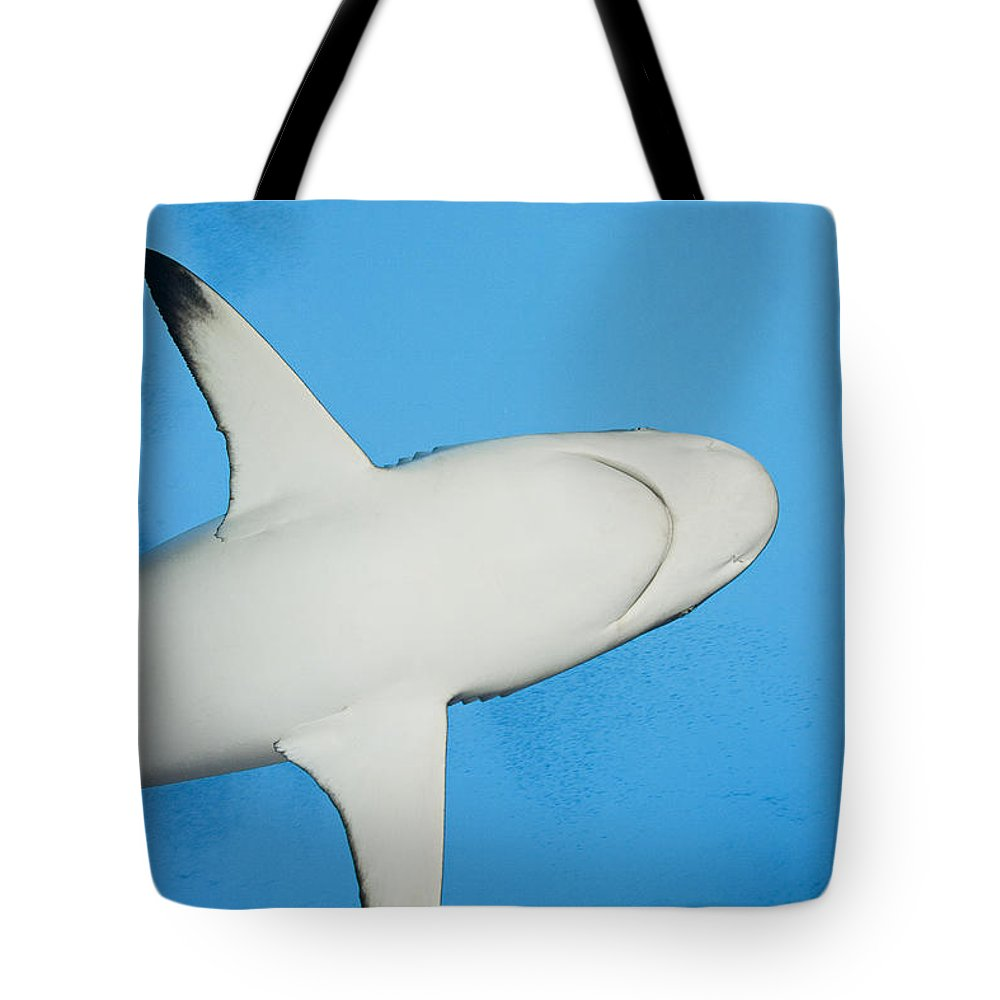 Amblyrhynchos Tote Bag featuring the photograph Grey Reef Shark by Dave Fleetham - Printscapes