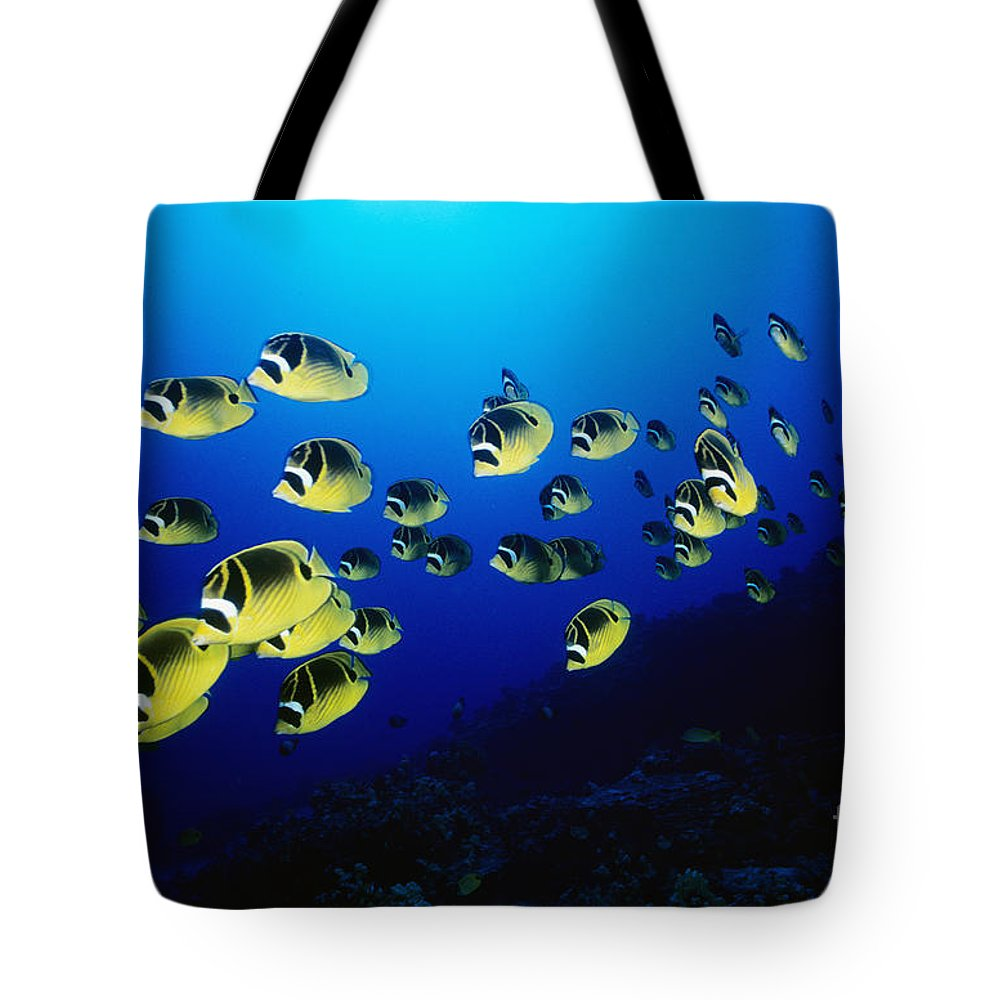Animal Art Tote Bag featuring the photograph Raccoon Butterflyfish by Dave Fleetham - Printscapes