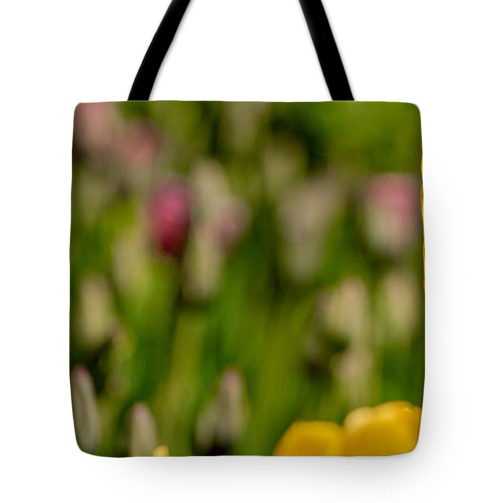 Canada Tote Bag featuring the photograph Tulips At Ottawa Tulips Festival by Aqnus Febriyant