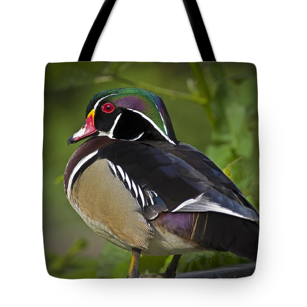 Wood Duck Tote Bag featuring the photograph Wood Duck by Rob Mclean