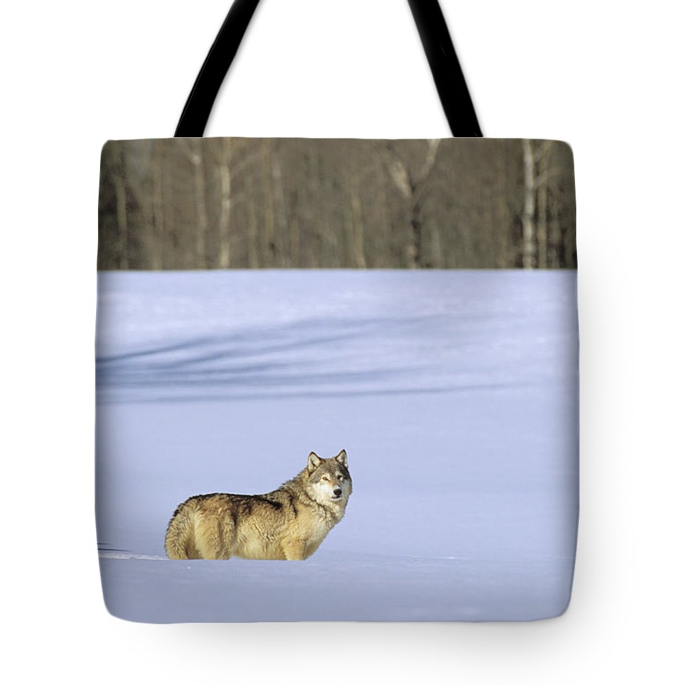 Afternoon Tote Bag featuring the photograph Gray Wolf by John Hyde - Printscapes