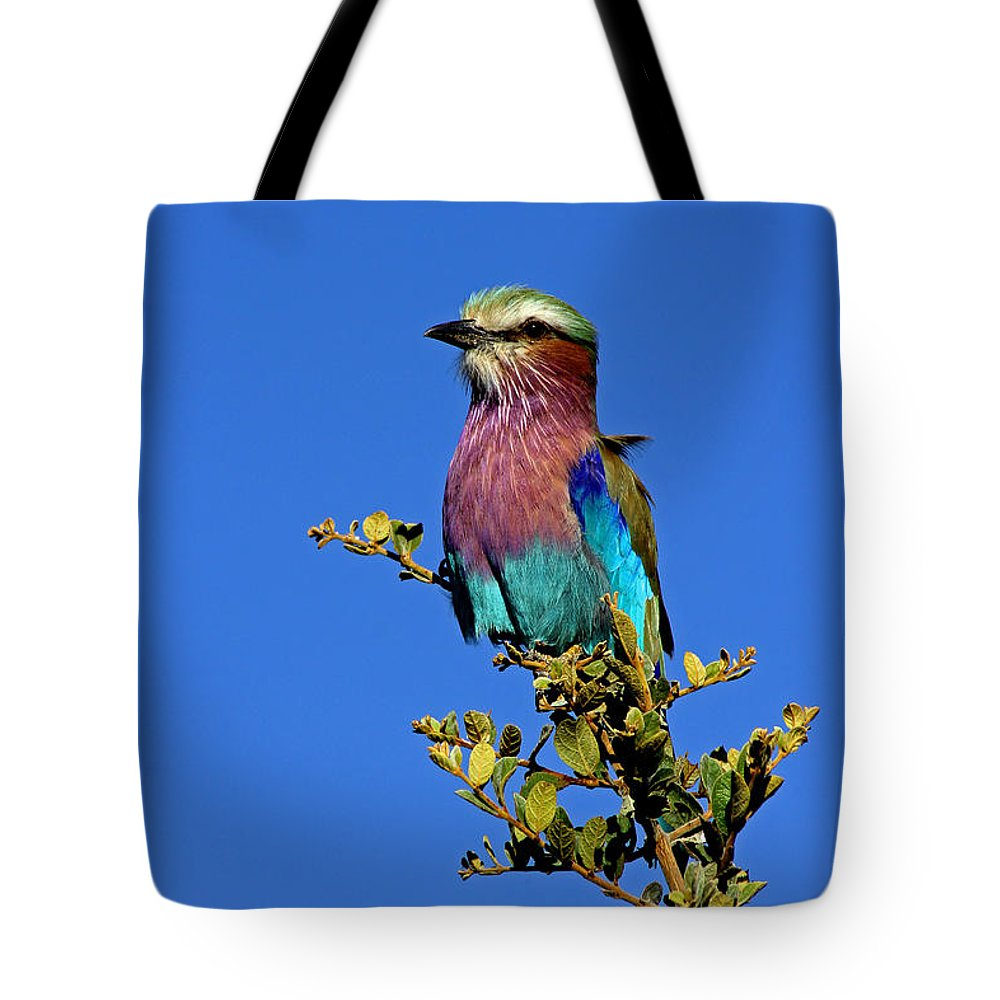 Lilac Breasted Roller Tote Bag featuring the photograph Lilac Breasted Roller by Tony Murtagh