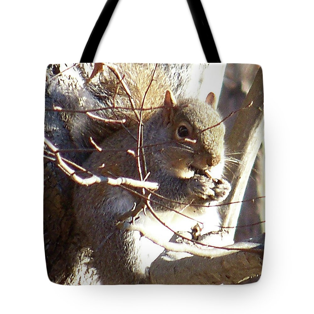 Squirrel Tote Bag featuring the photograph 5000-squirrel by Martha Abell