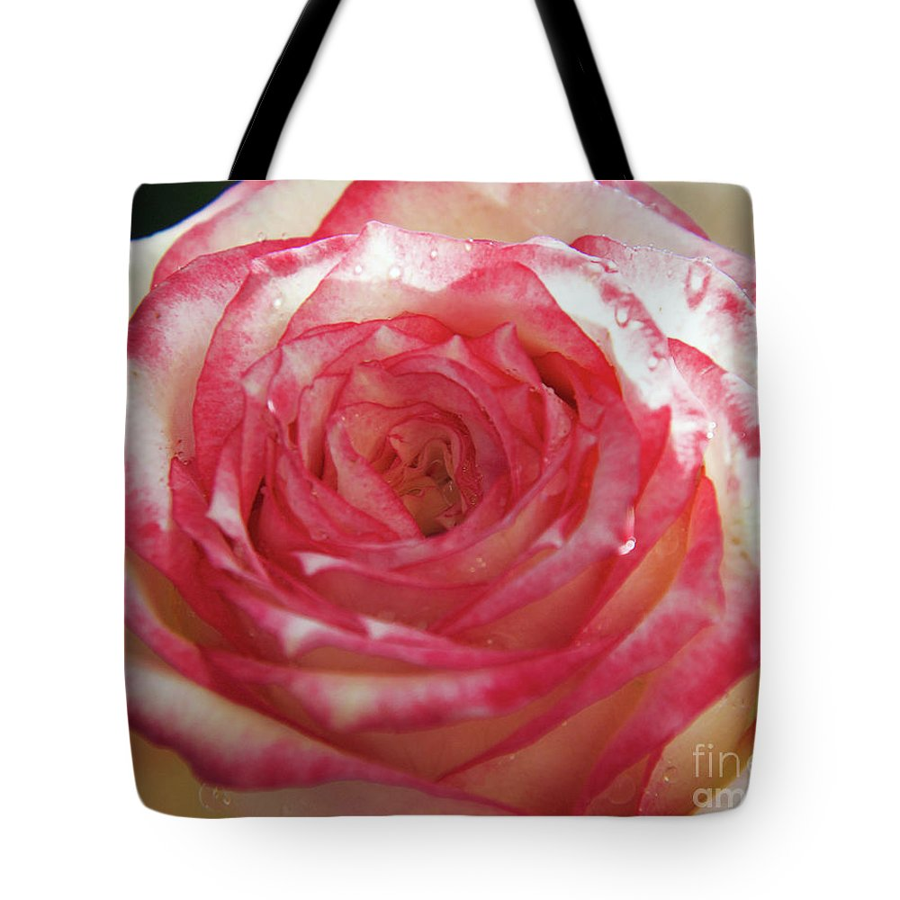 Flowers Tote Bag featuring the photograph Nice Rose by Elvira Ladocki