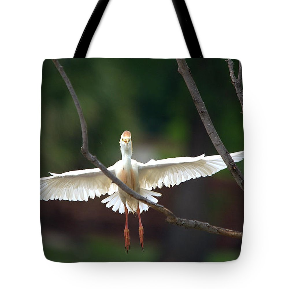 Roy Williams Tote Bag featuring the photograph Cattle Egret In Flight Portrait by Roy Williams
