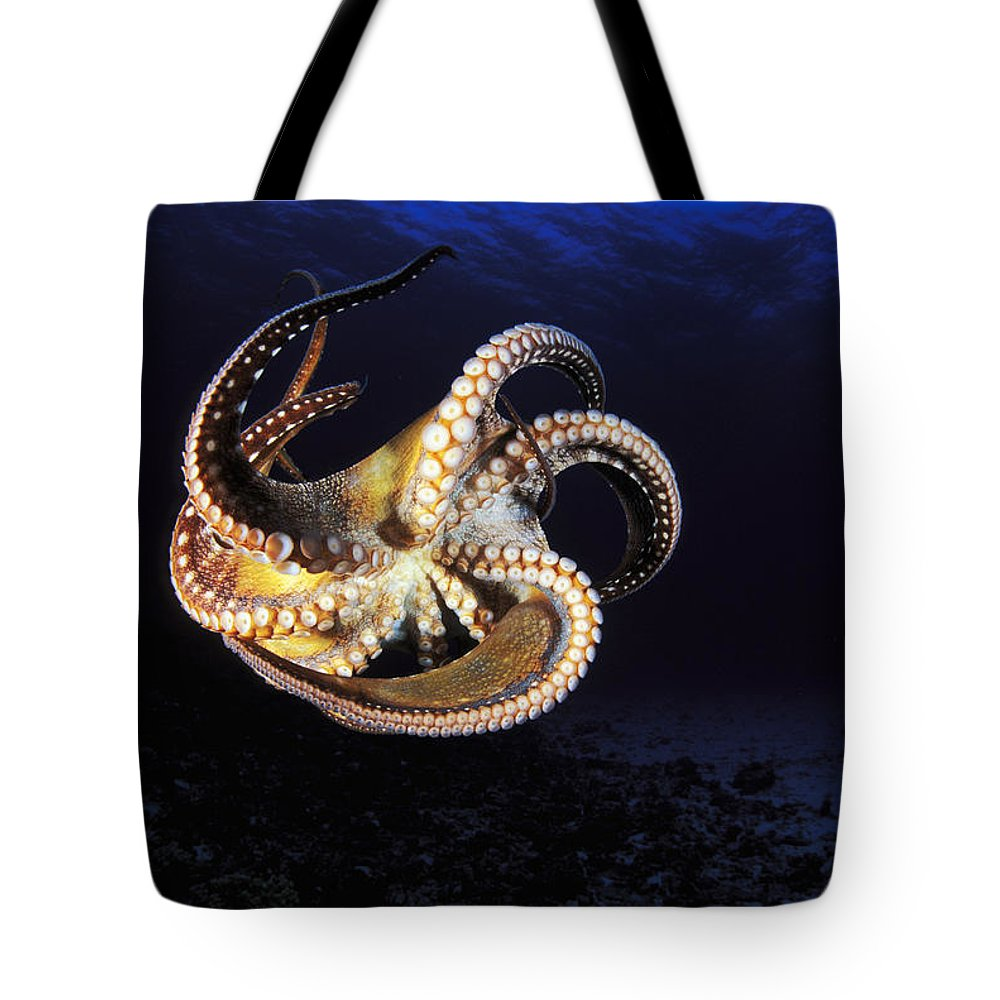 Animal Art Tote Bag featuring the photograph Hawaii, Day Octopus by Dave Fleetham - Printscapes