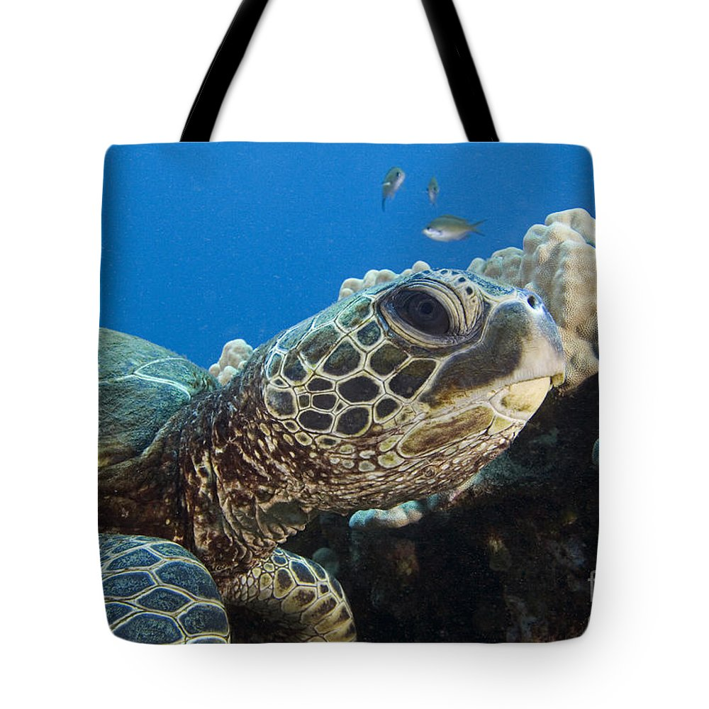 Animal Art Tote Bag featuring the photograph Hawaii, Green Sea Turtle by Dave Fleetham - Printscapes