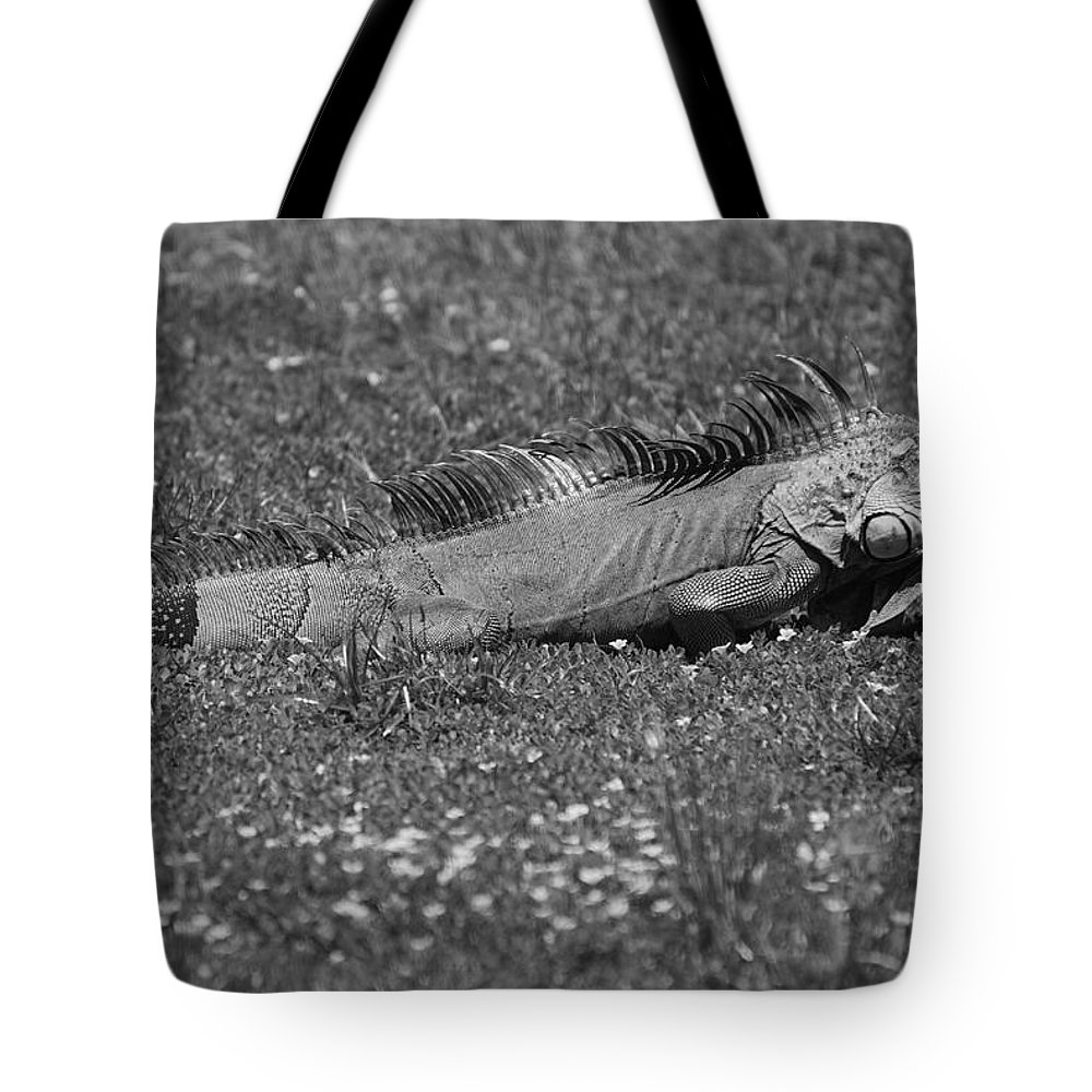 Sun Tote Bag featuring the photograph I Iguana by Rob Hans