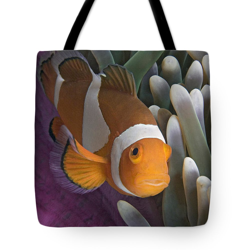 Amphiprion Tote Bag featuring the photograph Malaysia, Marine Life by Dave Fleetham - Printscapes