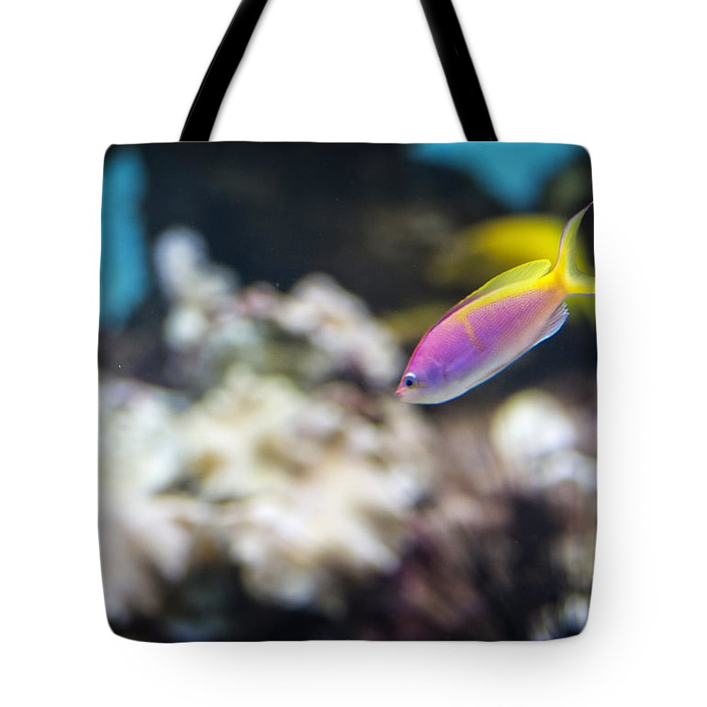 Fish Tote Bag featuring the photograph Tropical Fish by Michael Shake
