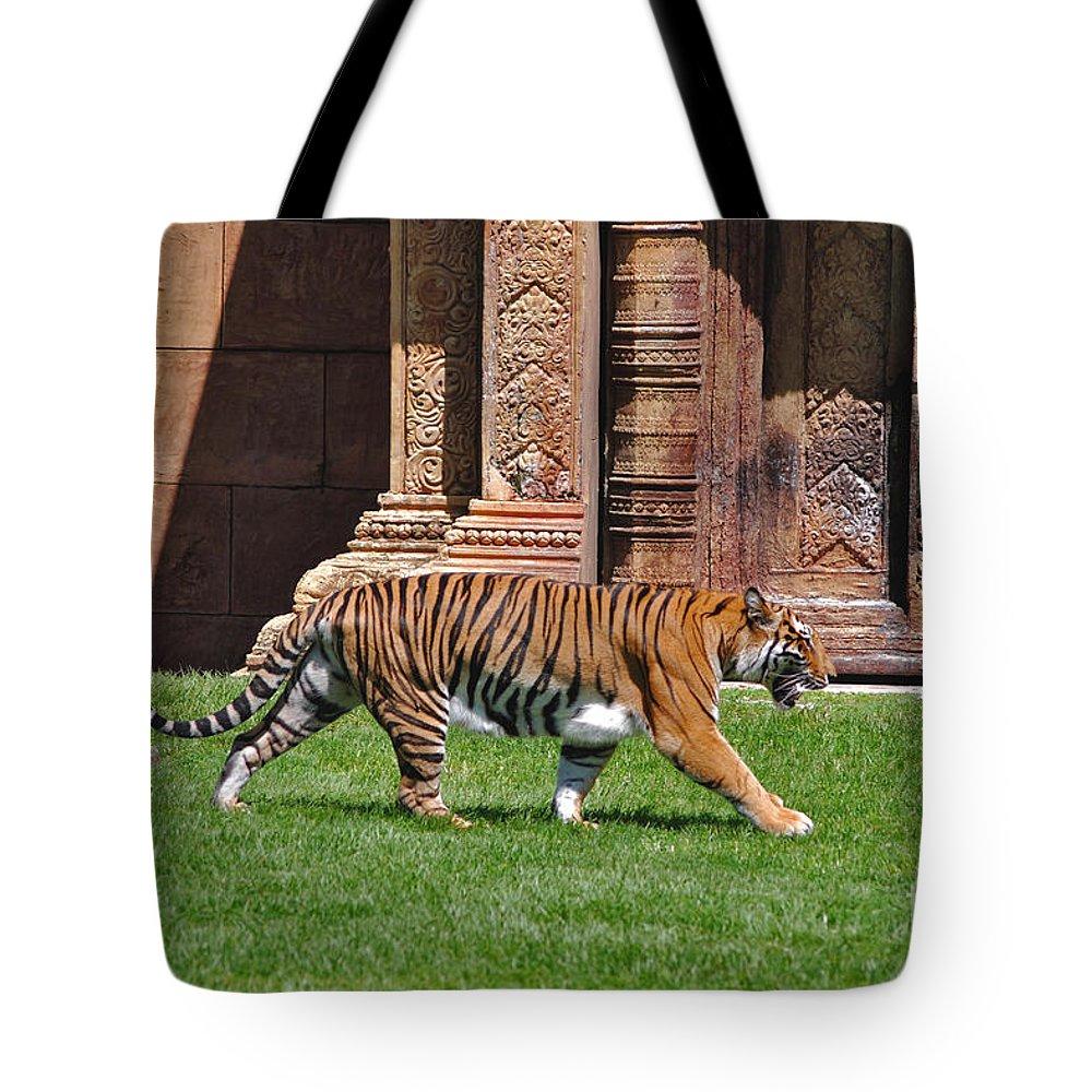 Sumatran Tiger Tote Bag featuring the photograph 61- Sumatran Tiger by Joseph Keane