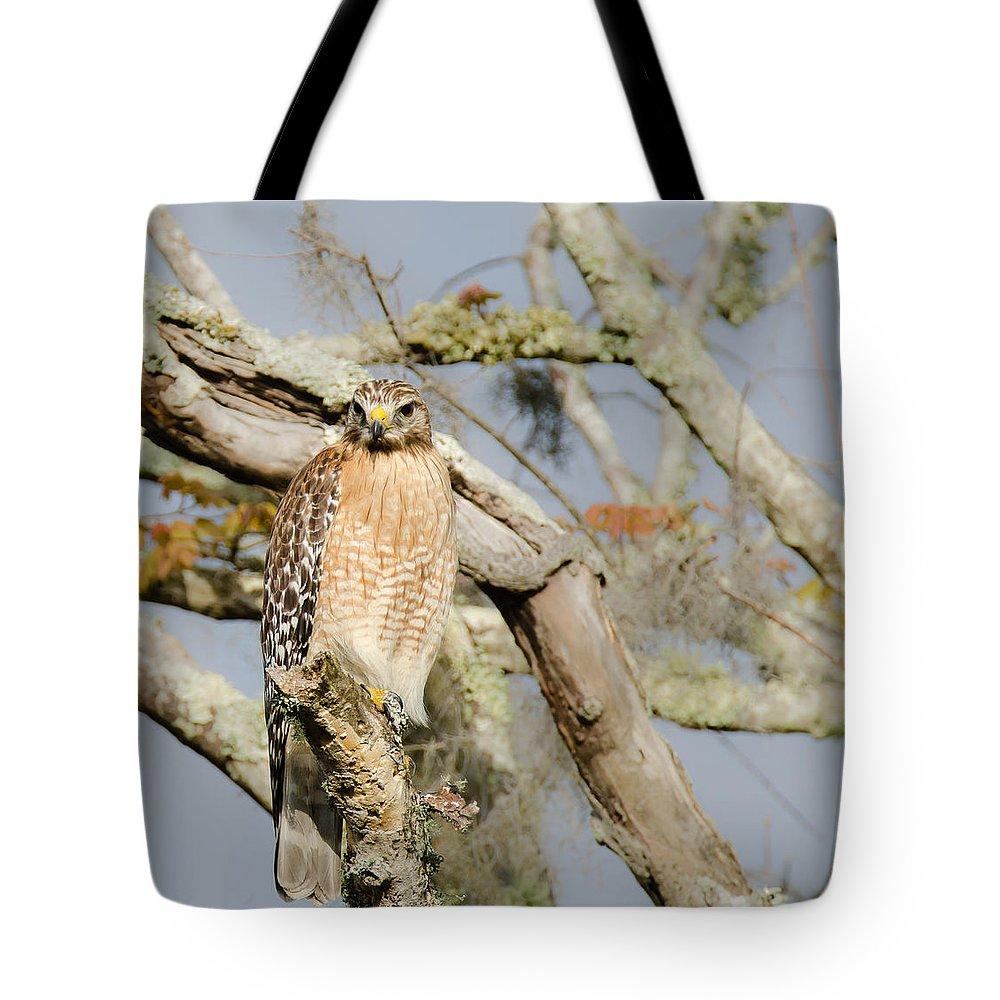 Bird Tote Bag featuring the photograph Birds by Karen Hart