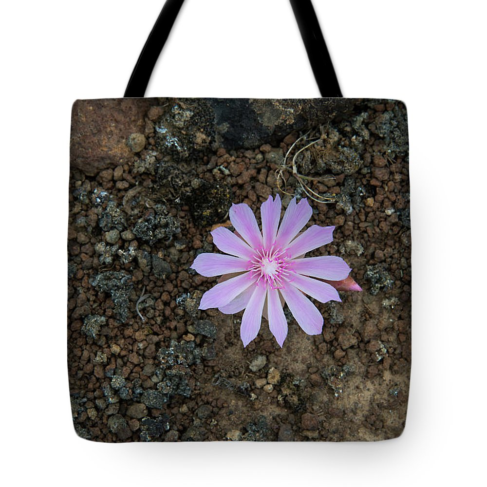Angiosperms Tote Bag featuring the photograph Bitterroot by Rich Leighton