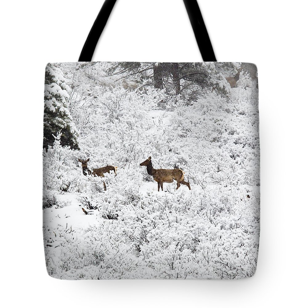 Elk Tote Bag featuring the photograph Elk In Deep Snow In The Pike National Forest by Steve Krull
