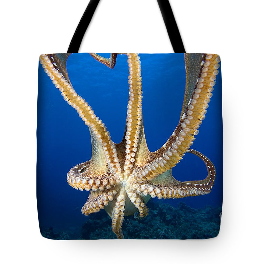 Abstract Tote Bag featuring the photograph Hawaii, Day Octopus by Dave Fleetham - Printscapes