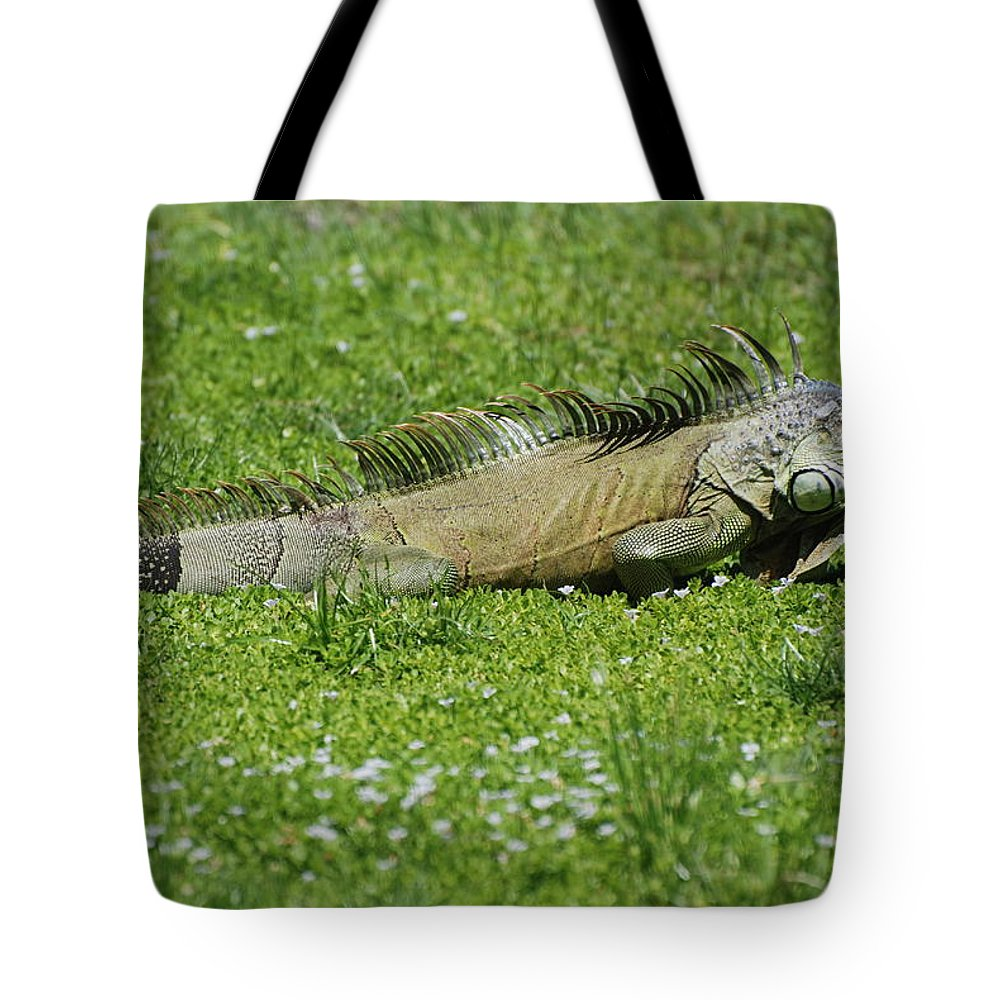 Macro Tote Bag featuring the photograph I Iguana by Rob Hans