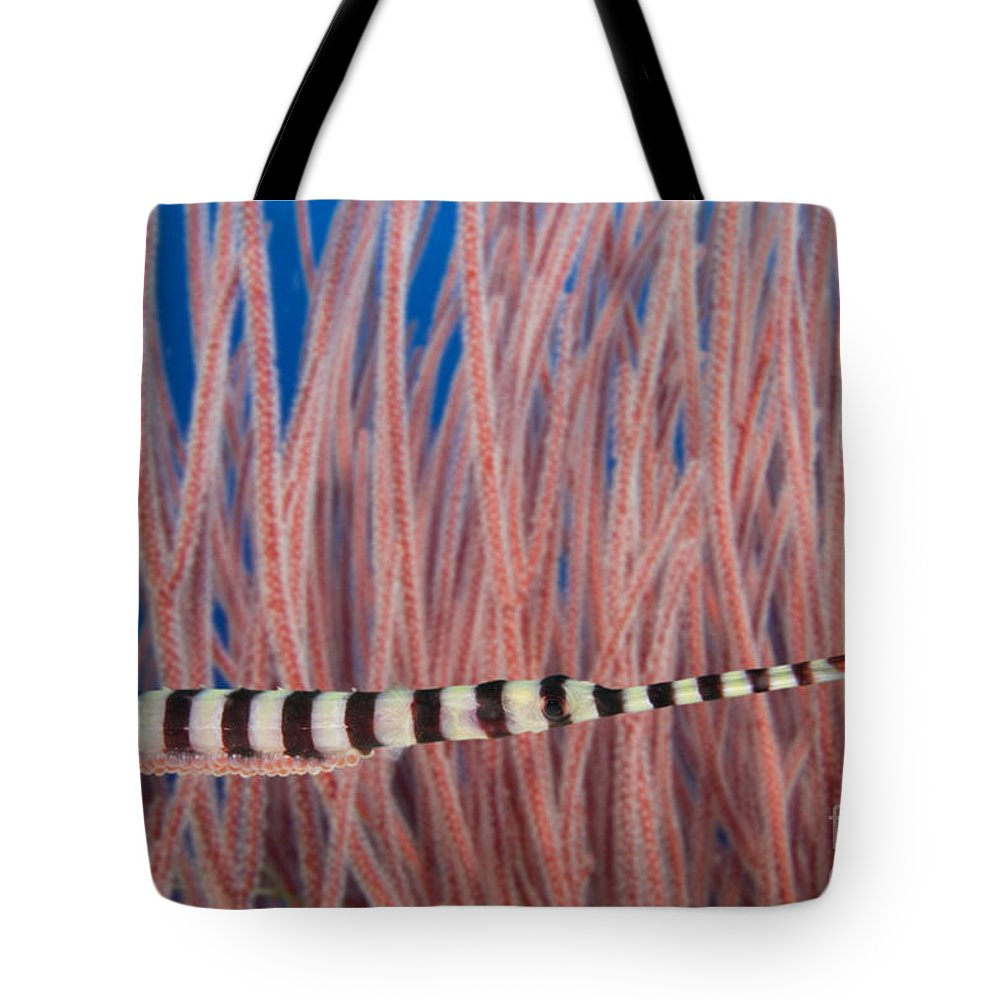 Animal Art Tote Bag featuring the photograph Malaysia, Marine Life by Dave Fleetham - Printscapes