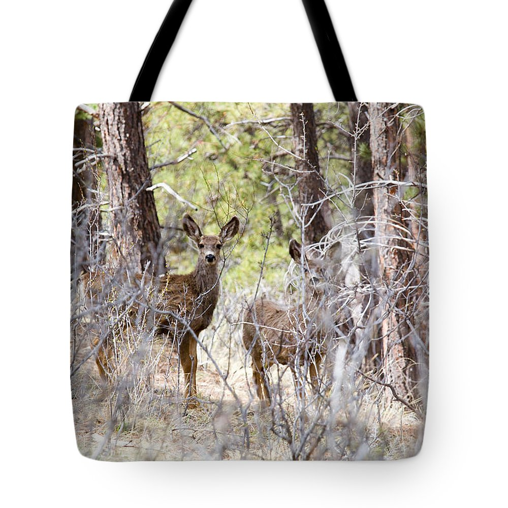 Deer Tote Bag featuring the photograph Mule Deer In The Pike National Forest Of Colorado by Steve Krull