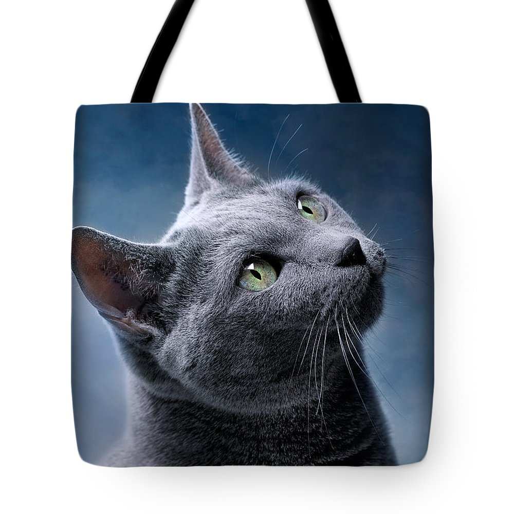 Russian Blue Lifestyle Products