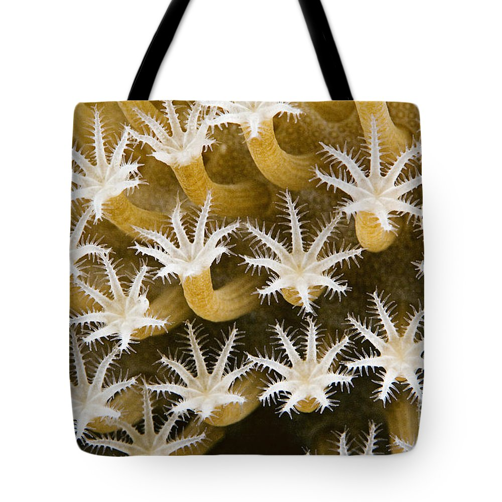 Abstract Tote Bag featuring the photograph Malaysia, Marine Life by Dave Fleetham - Printscapes