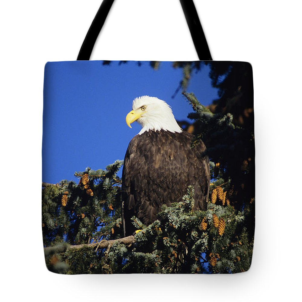Alaska Tote Bag featuring the photograph Bald Eagle by John Hyde - Printscapes