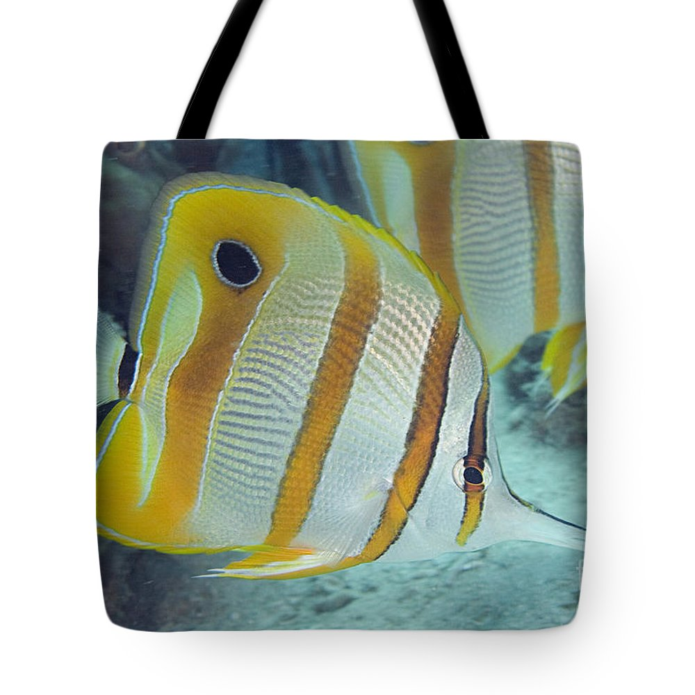 Animal Art Tote Bag featuring the photograph Malaysia Marine Life by Dave Fleetham - Printscapes