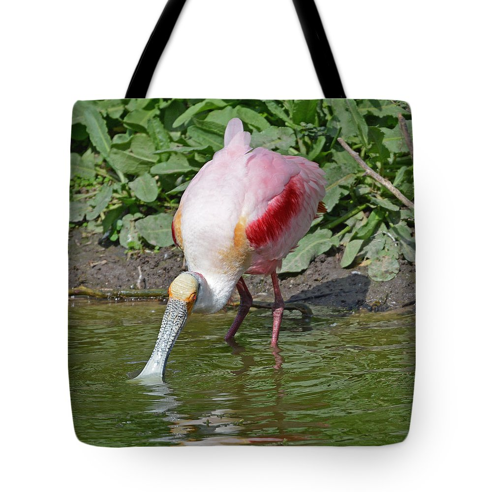 Aquatic Bird Tote Bag featuring the photograph Roseate Spoonbill by Lindy Pollard