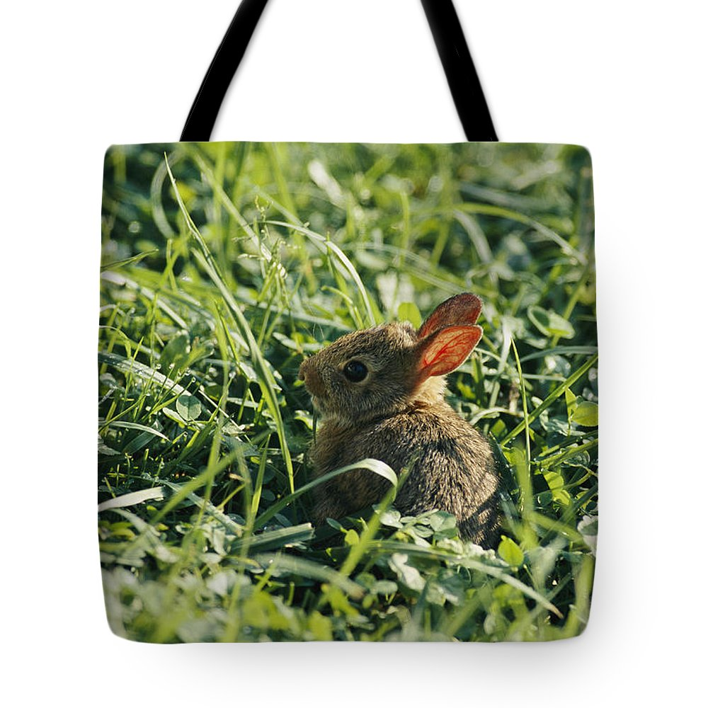 Shenandoah Valley Tote Bag featuring the photograph A Baby Cottontail Rabbit Sits Among by George F. Mobley