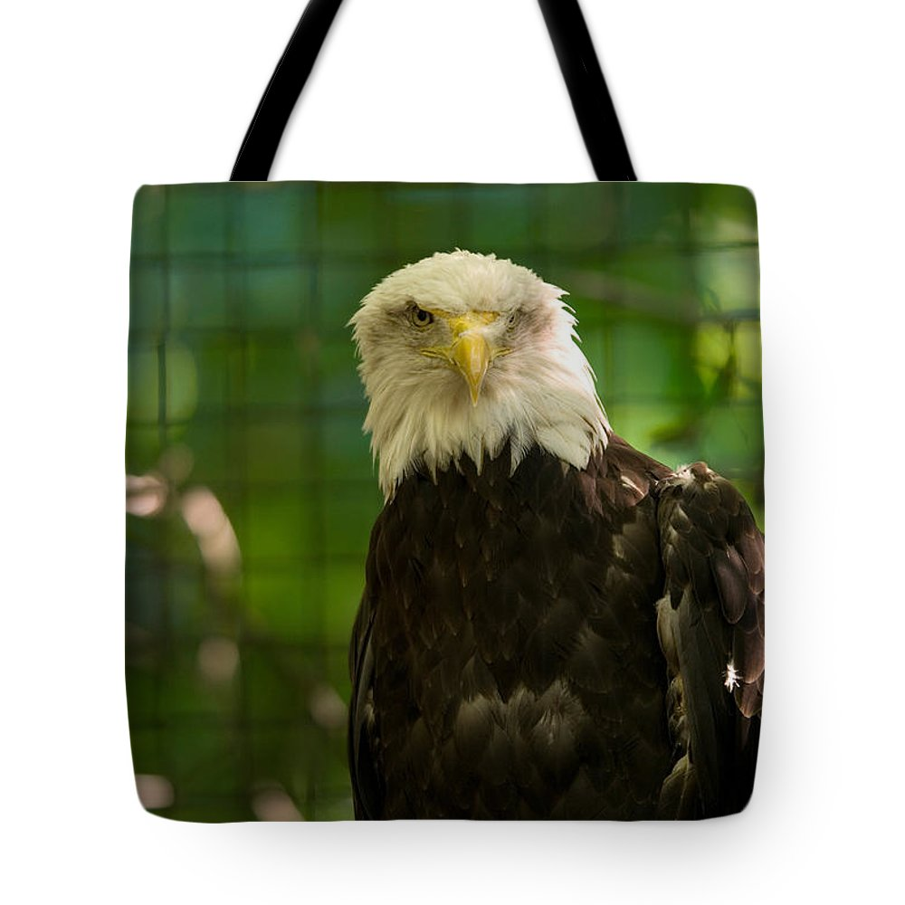 Bald Eagle Tote Bag featuring the photograph A Bald Eagle At The Lincoln Zoo by Joel Sartore
