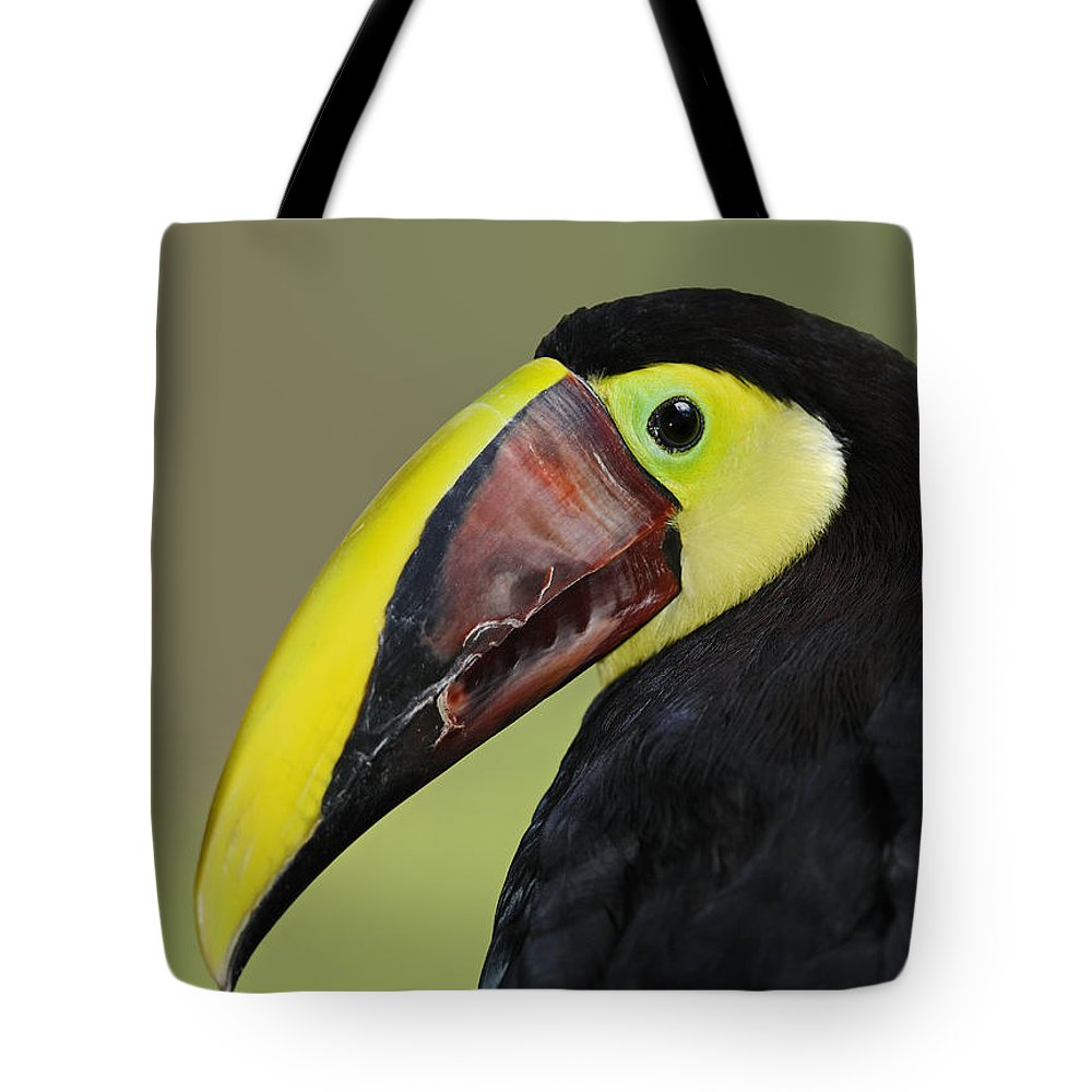 Chestnut-mandibled Toucan Tote Bag featuring the photograph A Bird For His Bill.. by Nina Stavlund