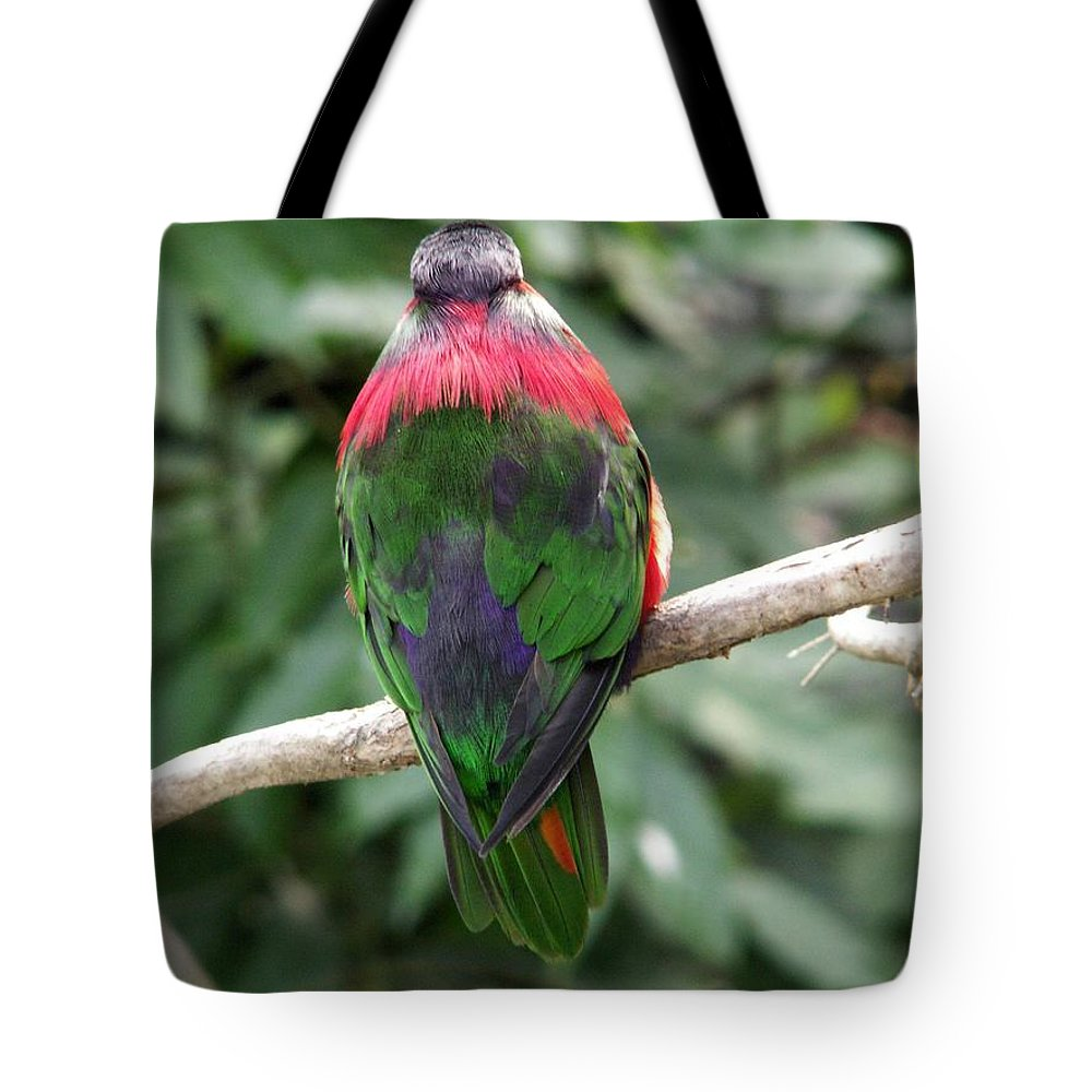 Bird Tote Bag featuring the photograph A Bird's Perspective by Amy Fose