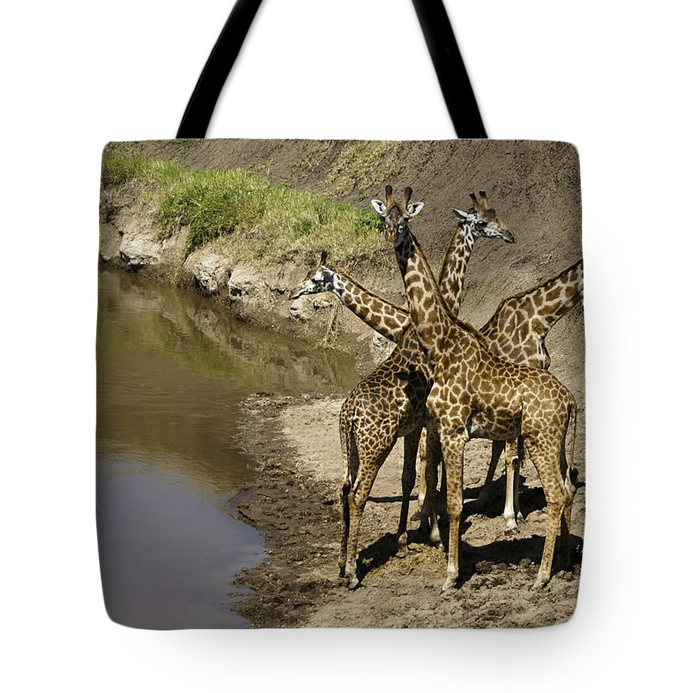 Africa Tote Bag featuring the photograph A Bouquet Of Giraffes by Michele Burgess