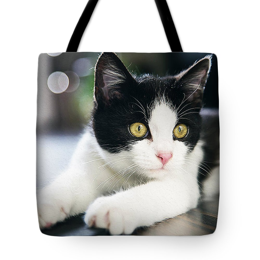 Cat Art Tote Bag featuring the painting A Cat With Black And White Fur by Queso Espinosa