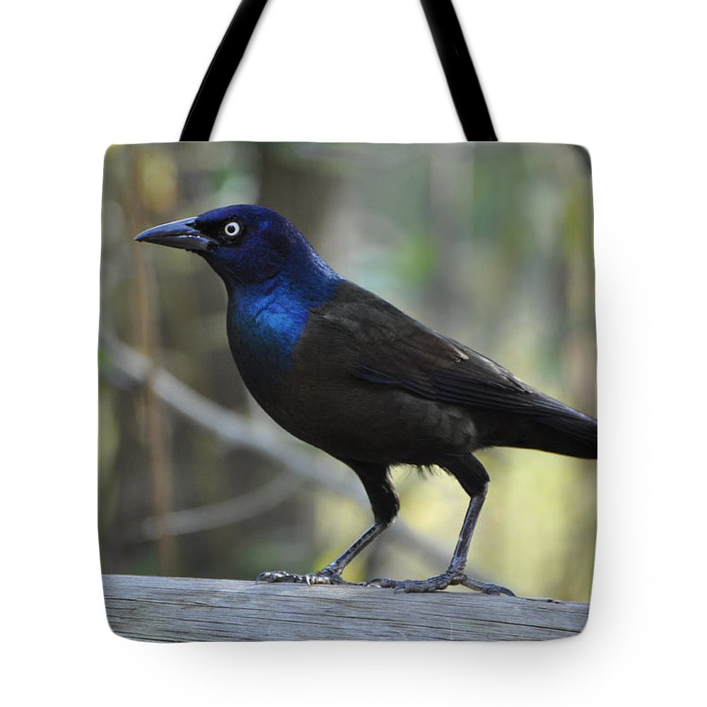 Birds Tote Bag featuring the photograph A Clever Thief by Jan Amiss Photography