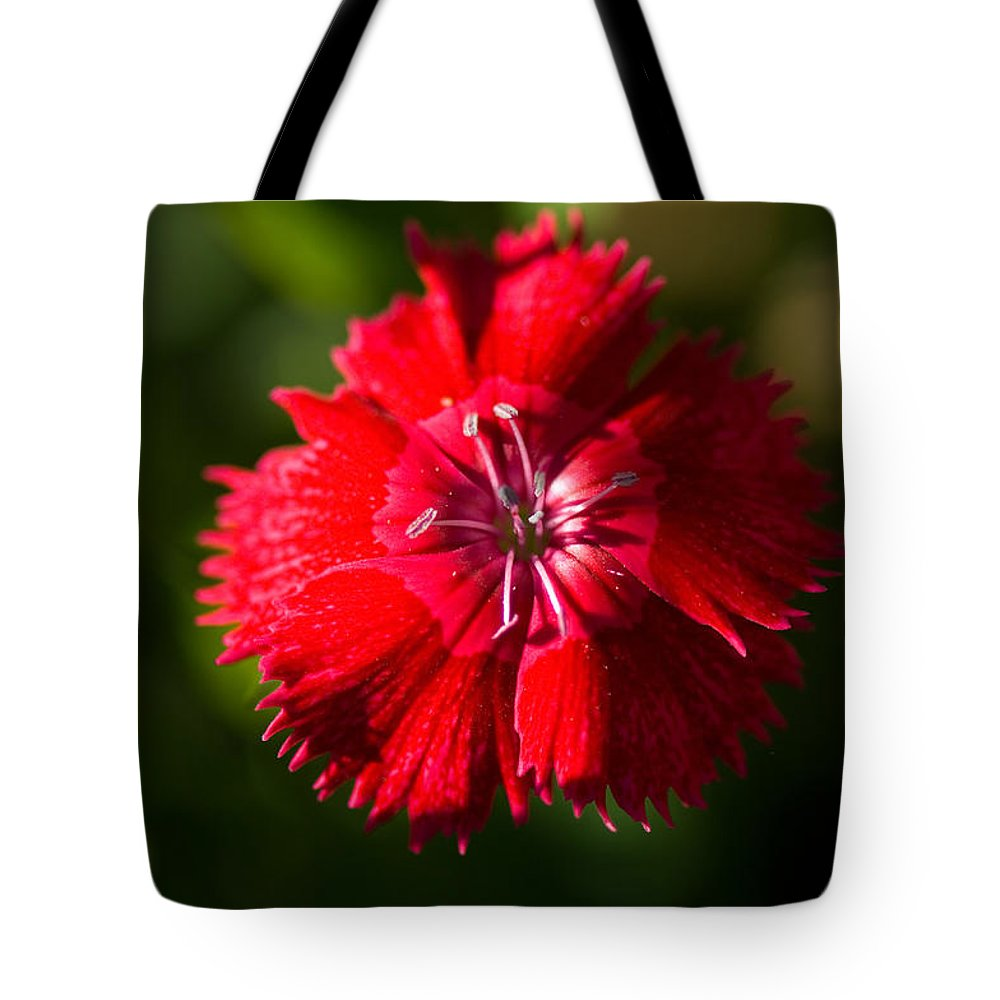 Photography Tote Bag featuring the photograph A Close Up Of A Dianthis Flower by Joel Sartore