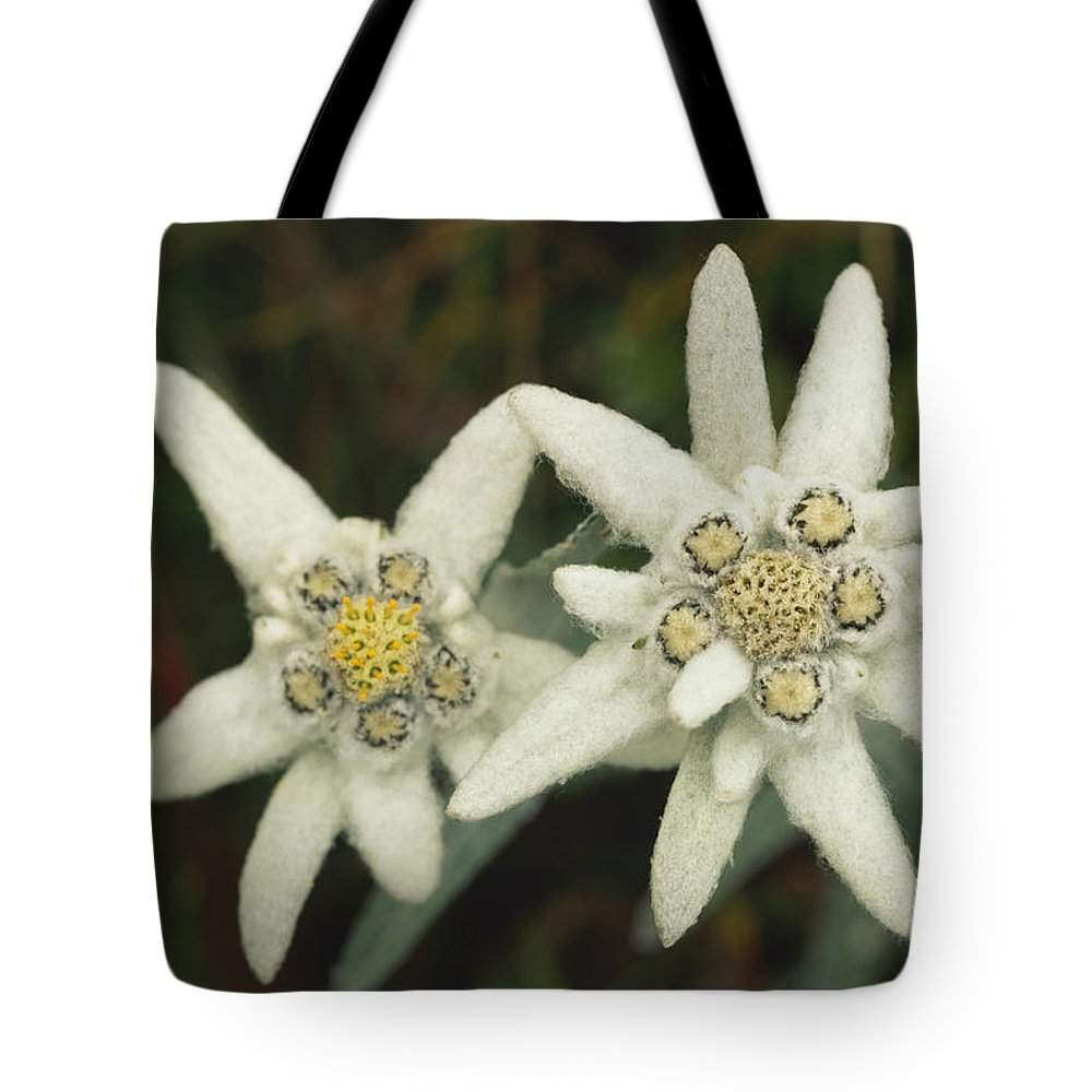 Plants Tote Bag featuring the photograph A Close View Of An Edelweiss Flower by Norbert Rosing
