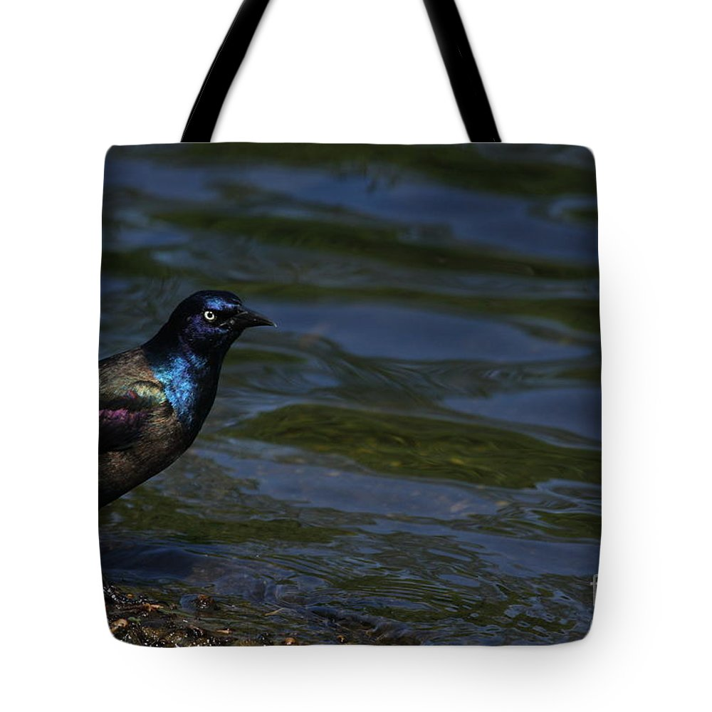 Bird Tote Bag featuring the photograph A Common Grackle by Karol Livote