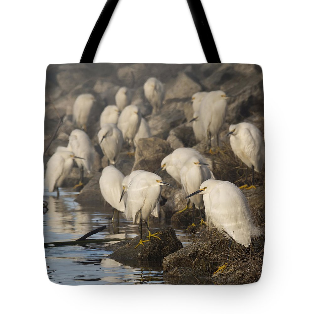 Birds Tote Bag featuring the photograph A Congregation Of Egrets by Bruce Frye